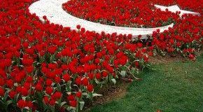 Увлекательный Фестиваль тюльпанов в Стамбуле